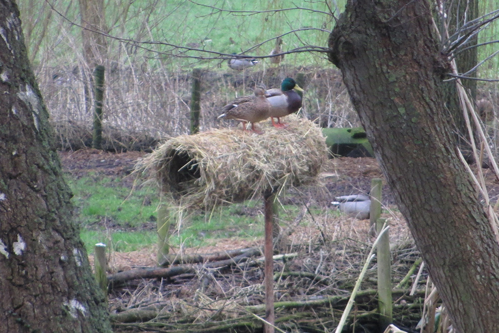 duck nest tubes